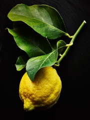 Lemon  on stem by London food photographer michael michaels