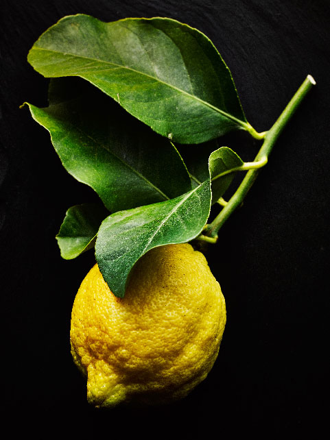 Lemon  on stem by London food photographer michael michaels
