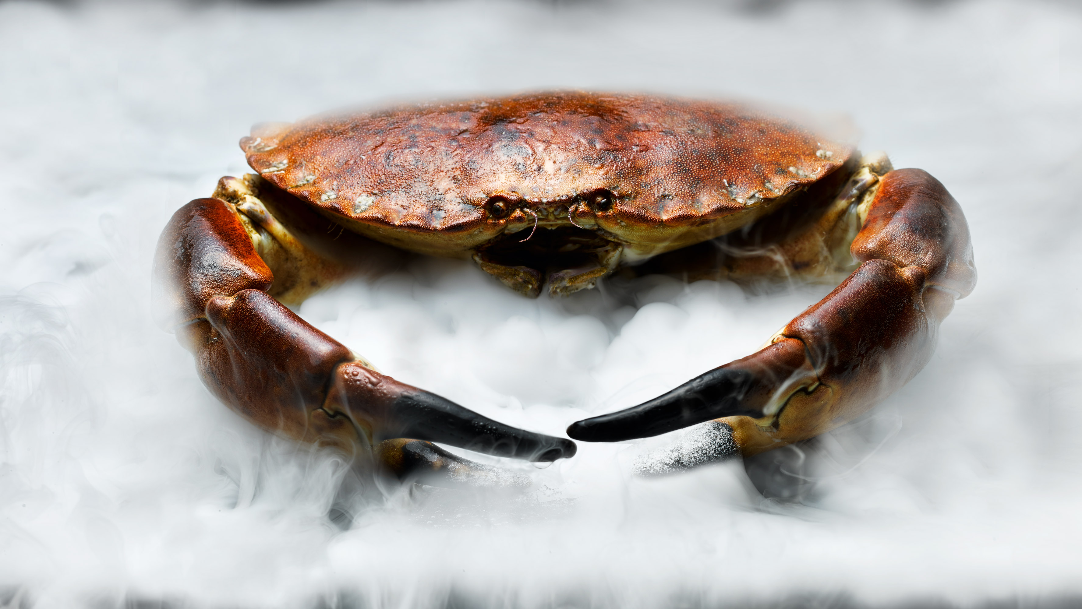 Food photographer London Image of Crab out of mist