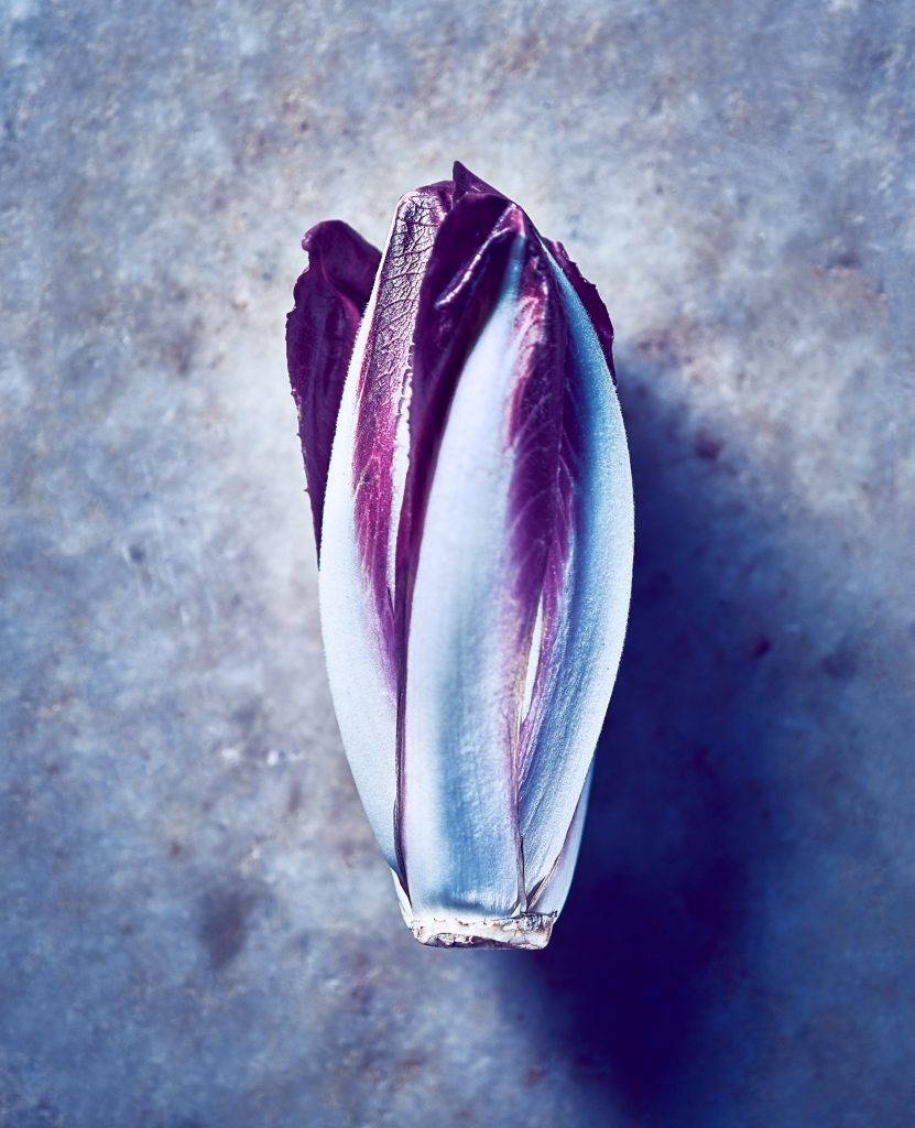 Photo of purple chicory
